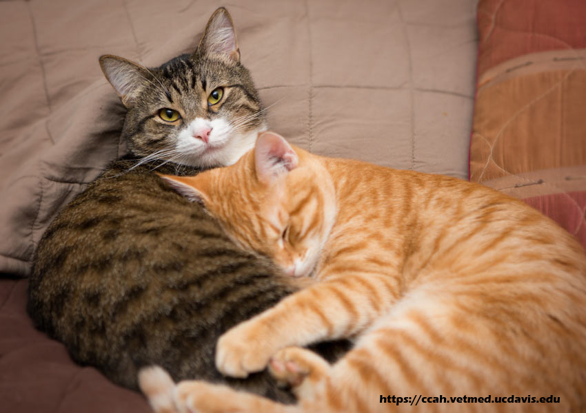 Cat Health - Treating Your Cat at Home
